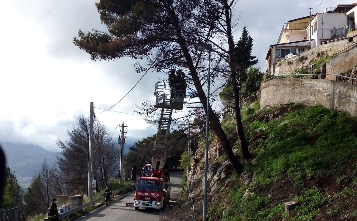 Alberi rischiano di finire sulla strada: intervento dei vigili del fuoco