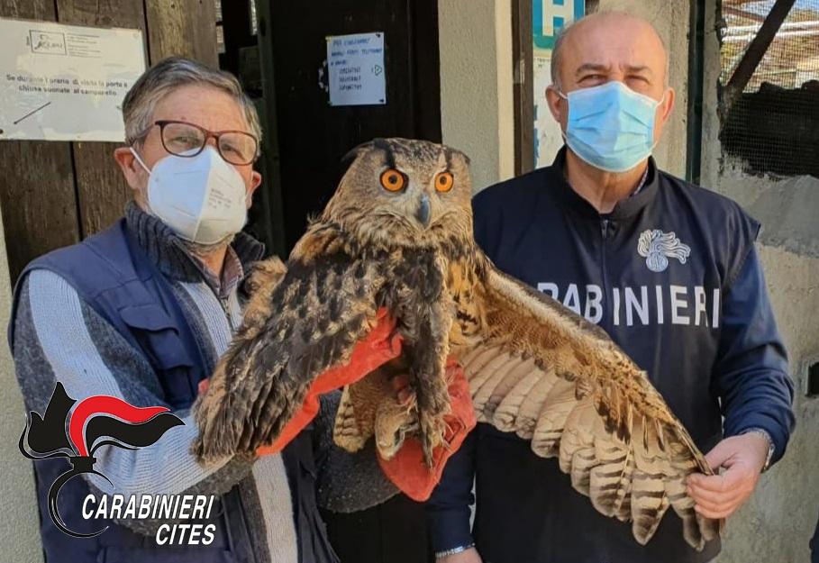 Rapaci e uccelli protetti maltrattati e messi in vendita: quattro denunce
